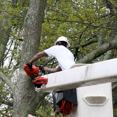 man on bucket crane chainsawing errant tree limbs