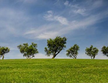 The Health Benefits of Trees