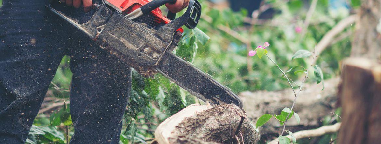 Closeup of chainsaw cutting a fallen tree log