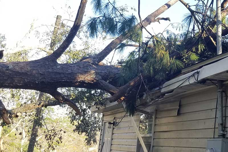 Large tree that has fallen on someone's roof and has done damage.