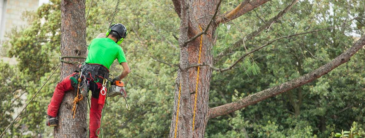 man with climbing equipment on tree cutting off errant branches