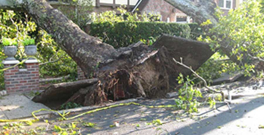 How Do Storms Uproot Trees?